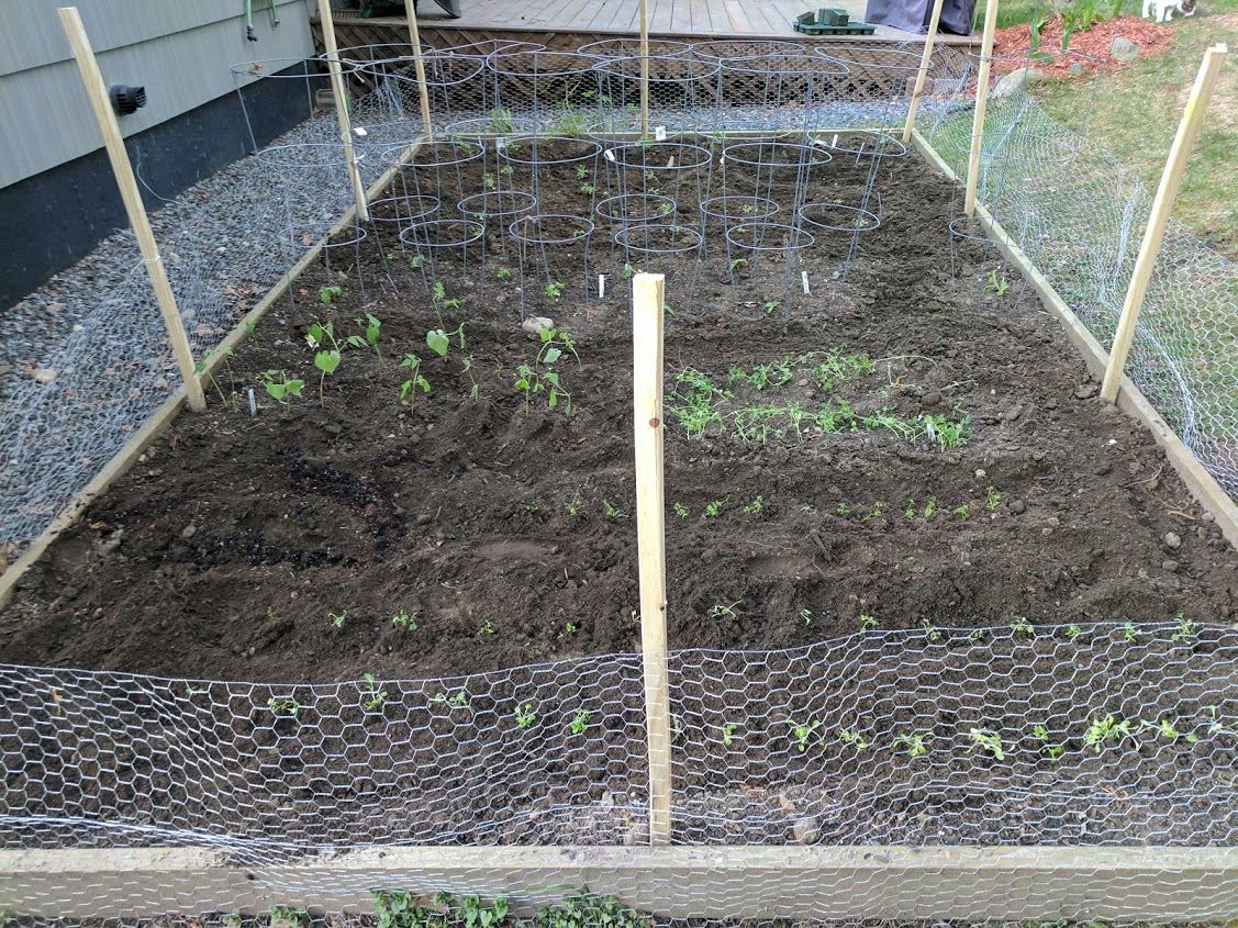 Backyard garden bed full planted and with woodchuck wall